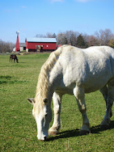 Photo: White and black horses in a field in front of a red barn and windmill at Carriage Hill Metropark in Dayton, Ohio.