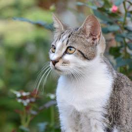 by Marybeth Fields - Animals - Cats Kittens ( cats, kitten, cat, kittens )