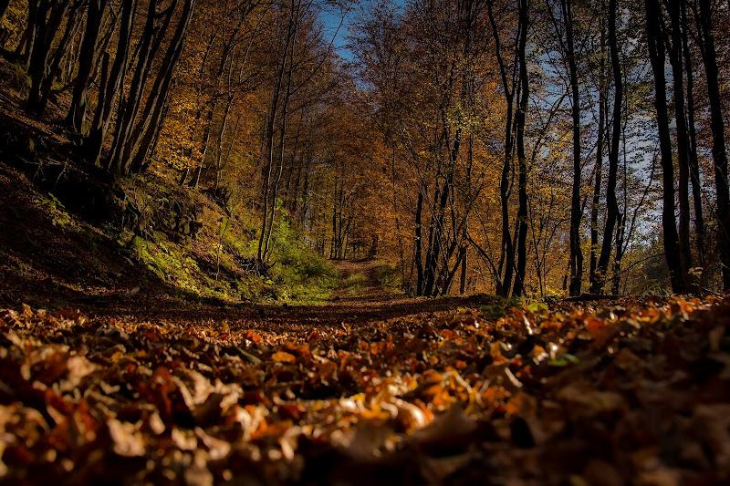 passeggiando nel bosco di Winterthur58