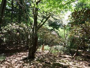 堂倉山山頂はシャクナゲが多く