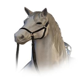 調教された白馬