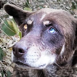 Please by Richard Michael Lingo - Animals - Dogs Portraits ( mammals, animals, dog, eyes, food )