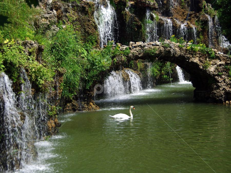 waterfall & swan by Hale Yeşiloğlu - Landscapes Waterscapes ( waterfall, swan,  )