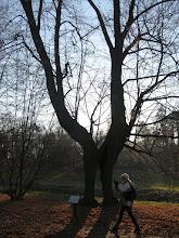 Photo: Natura potrafi tworzyć ciekawe dzieła. Drzewna brama