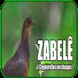 Pássaro Zabelê icon