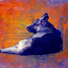 bilo by John Kolenberg - Mixed Media All Mixed Media ( pwc84, dog, mutt, pet,  )