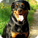 Rottweiler Live Wallpaper icon