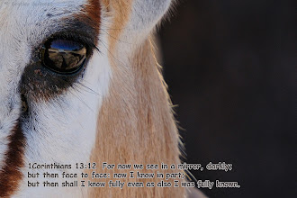 Photo: Look at the reflection in the eye. #SacredSunday +SacredSunday™ by +Charles Lupicais curated by +Margaret Tompkins+Robyn Morrison+Sherrie von Sternberg+Manfred Berndtgen and supported by +Chatchai Rombix+Steve Barge+Justin Hill                            #Jesus #Christ #Bible #God #Lord #heaven #atheist #religion #christianity #Prophecy #wisdom #inspire #scripture #beliefs #love #posters