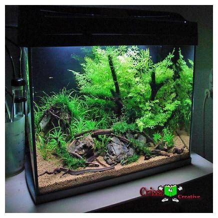 230 Desaign Aquascape