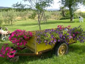 Photo: Il giardino