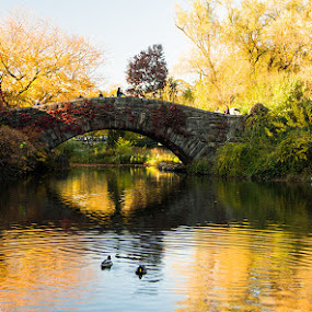 Central Park in the Fall by Stephen Majchrzak - City,  Street & Park  City Parks