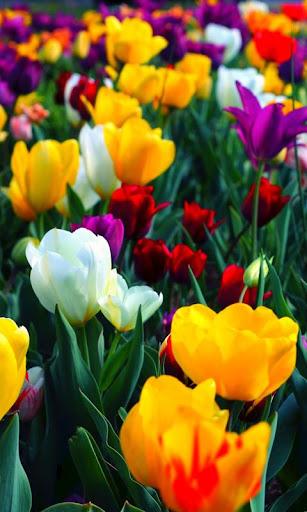 LWP 綺麗な花
