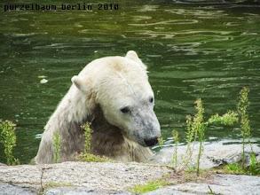 Photo: Knut nimmt die Insel in Augenschein ;-)