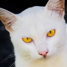 catty by Reneboy Bautista - Animals - Cats Kittens