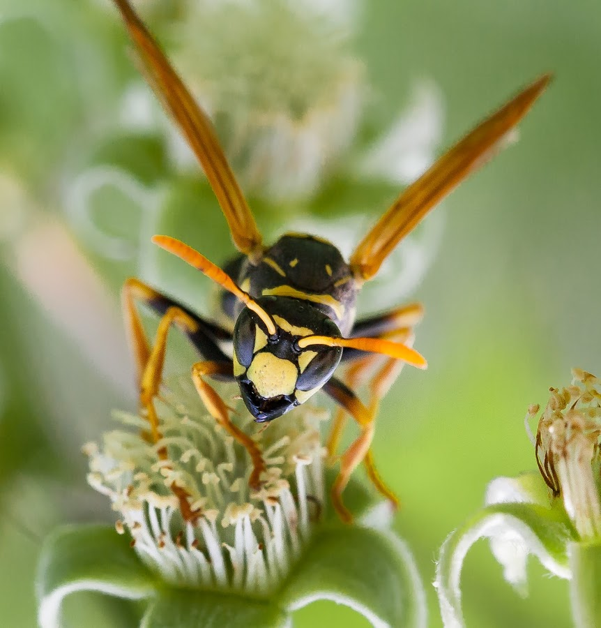 by Thomas Berwein - Animals Insects & Spiders