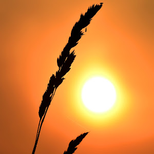 sunset and queen annes lace_9790_edited-1.jpg