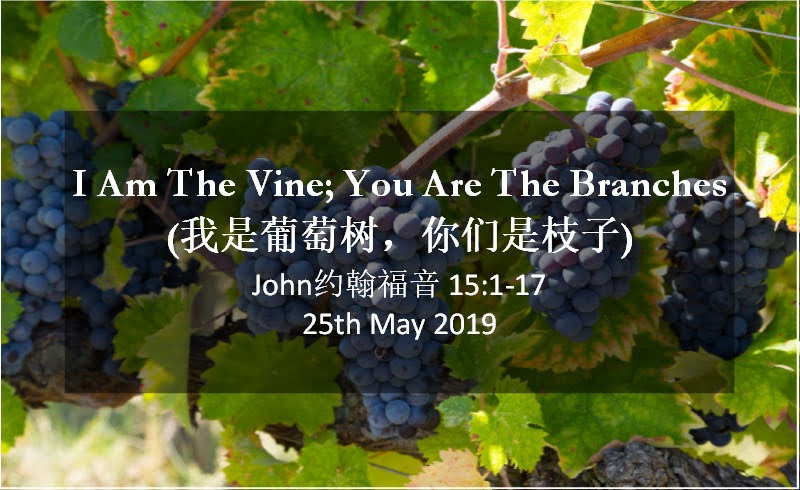 I Am The Vine; You Are The Branches (我是葡萄树,你们是枝子)