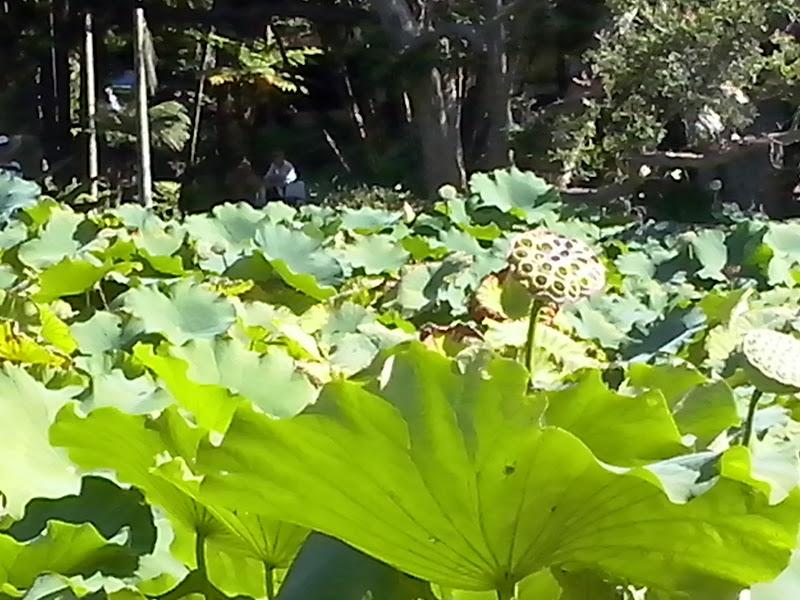 Verde dall'acqua  di Manghituducla
