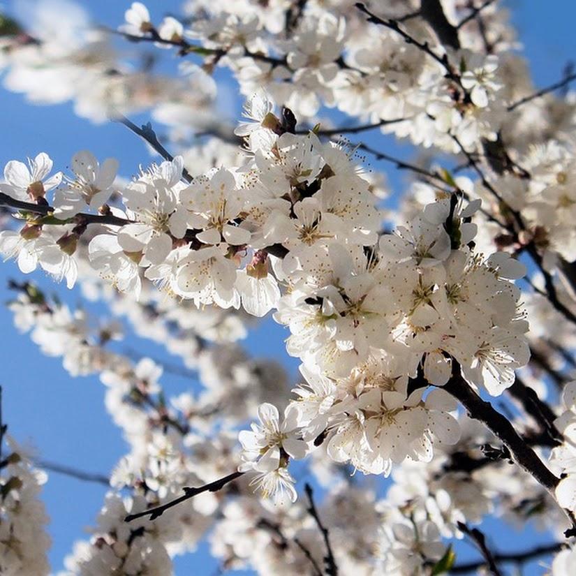Mayo, el mes de las flores: descubre su origen