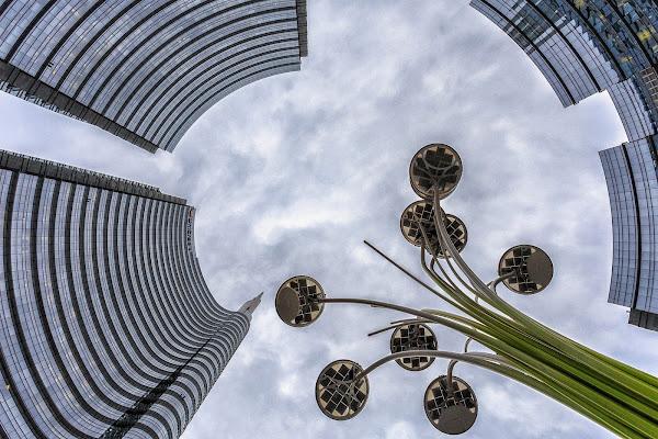 Fiori urbani di prometeo