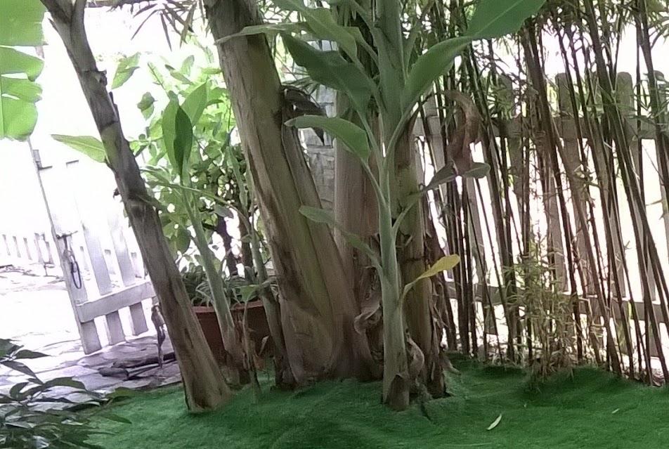tuyển lựa trang hoàng sử dụng cỏ sân vườn mang theo sự độc đáo