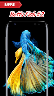 Betta fish wallpaper apps on google play for Siamese fighting fish crossword