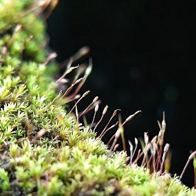 Lumut by Oengkas Wijaya - Instagram & Mobile Android ( nature, macro flower, macro photography, makro, macro shot )