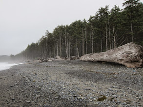Photo: Huge logs were washed up everywhere.