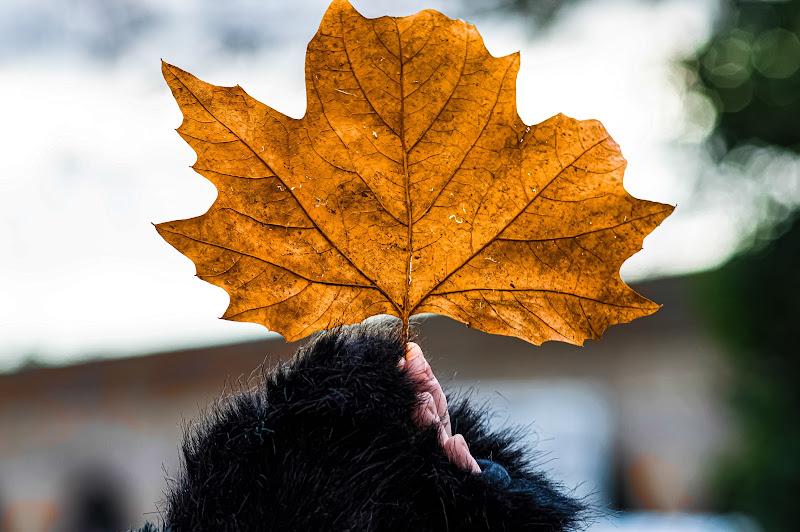 Verso l'autunno. di antonello1685