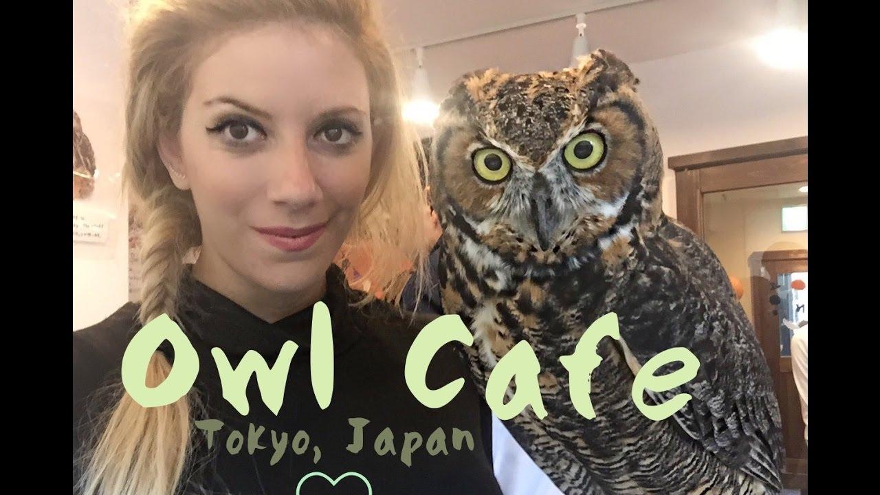Owl café in Harajuku