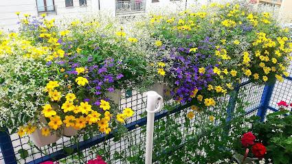 Najpiekniejsze Kwiaty Na Balkon Naszych Czytelnikow 20 Zdjec Twojogrodek Pl