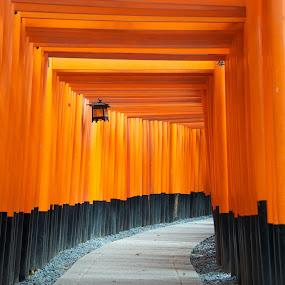 Fushimi Inari Shrine by Paul Atkinson - Landscapes Travel ( religion, orange, structure, inari, torii, japan, shrine, kyoto, fushimi, shinto, design, gate )
