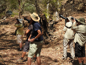 Photo: Spotting flycatchers, fantails and robins at Margaret River, Marrakai track
