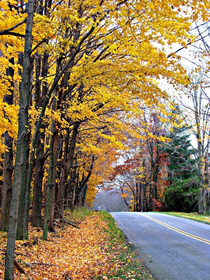 Fall by Carrie Klotz - City,  Street & Park  Vistas ( fall, trees, road )