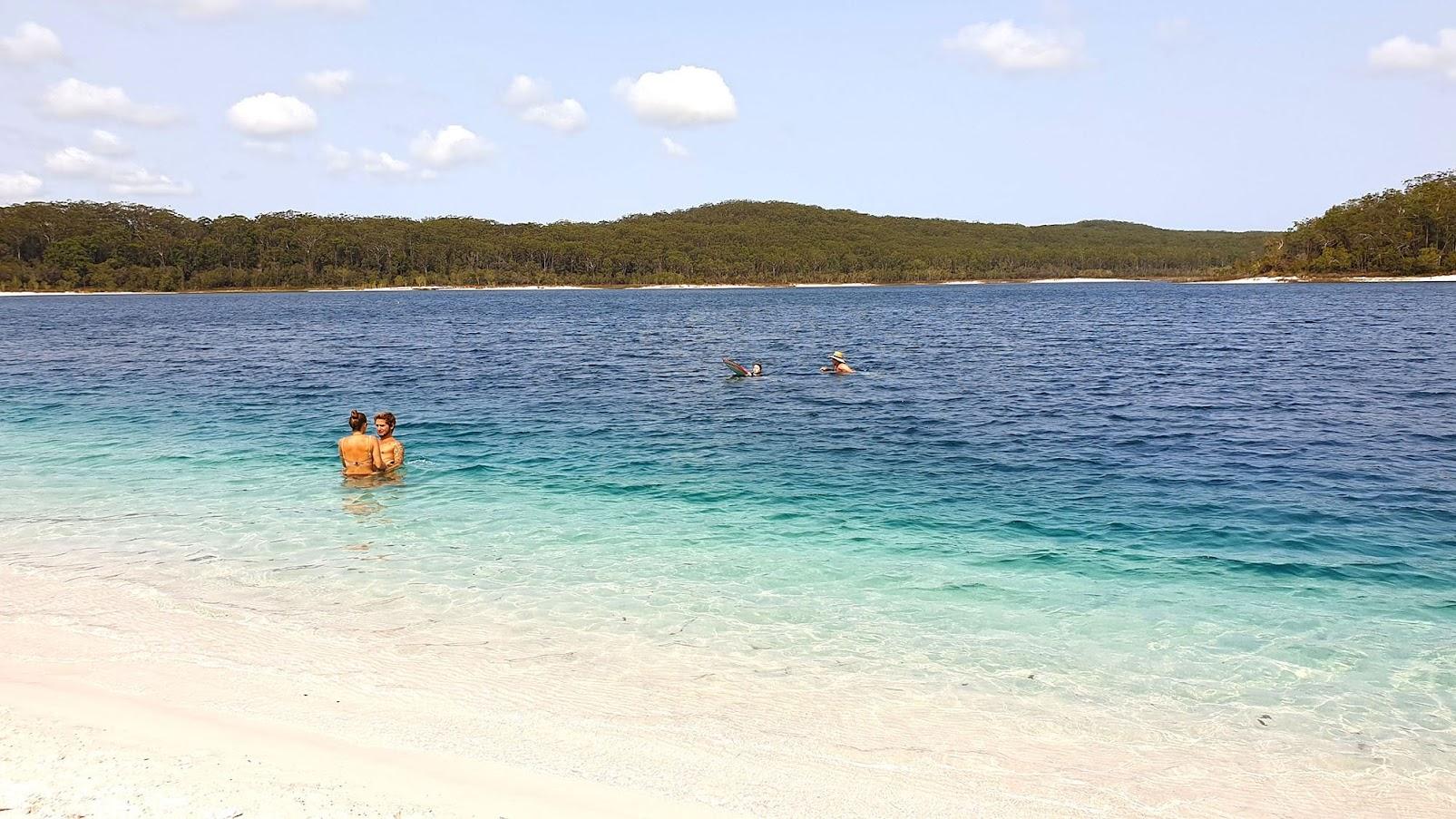 Visitar FRASER ISLAND, a maior ilha de areia do mundo, e ver Dingos (e Hervey Bay)   Austrália