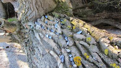 Photo: am Ende der sich schlängelnden Muschelpfade,