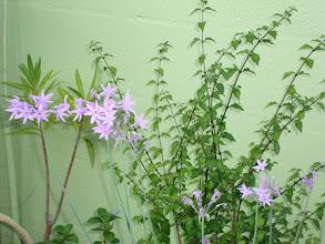 Photo: Plants Galore