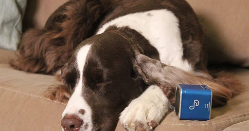 Music for Dogs: Amazon Customers Swear by These Bluetooth Speakers