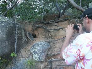 Photo: Magnetic Island, echidna!
