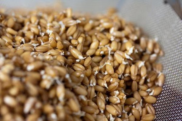 Sprouted Grain Salad Recipe