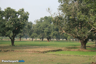 Photo: Mango garden of Mirzapur, in Atwari