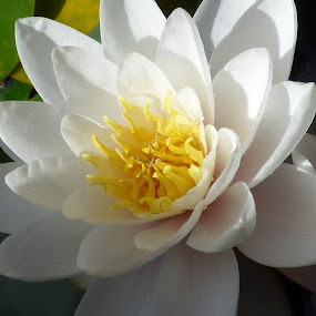 by Nick Parker - Flowers Single Flower (  )