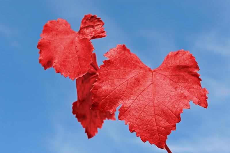 la magia dell'autunno... di _Penelope_