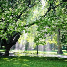 Sunrays in water streams in a park by Svetlana Saenkova - City,  Street & Park  City Parks ( sunrays, green, margit island, budapest,  )