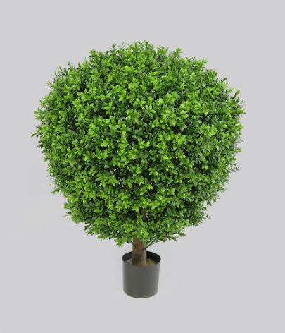Boxwood Ball (Buxbomboll) - 50cm, 60cm & 75cm