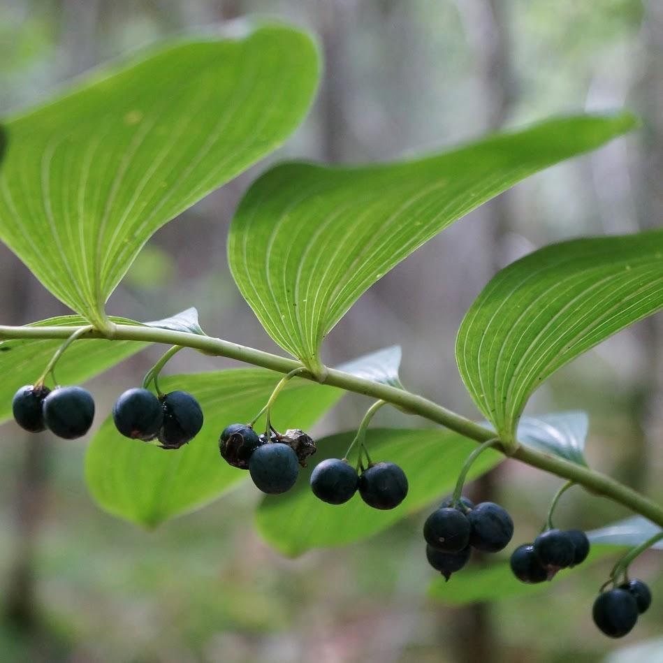 vrucht en blad