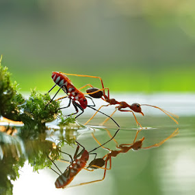 The Race by Teguh Santosa - Animals Insects & Spiders