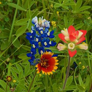 Three Texas Wildflowers.jpg