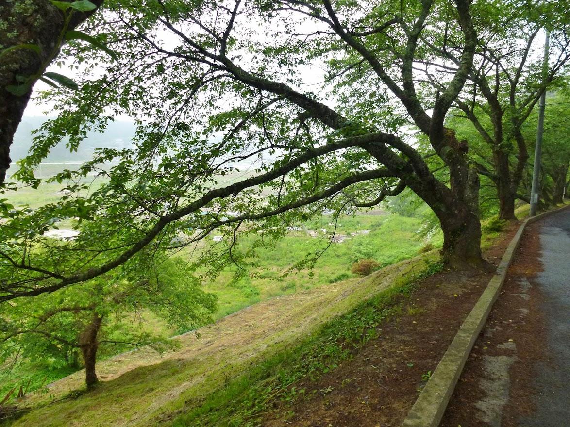 志津川高校旭桜坂 写真4