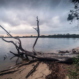 Tree on the Beach by Geoffrey Wols - Nature Up Close Trees & Bushes ( sand, beach, tree, dawn, clouds, water,  )